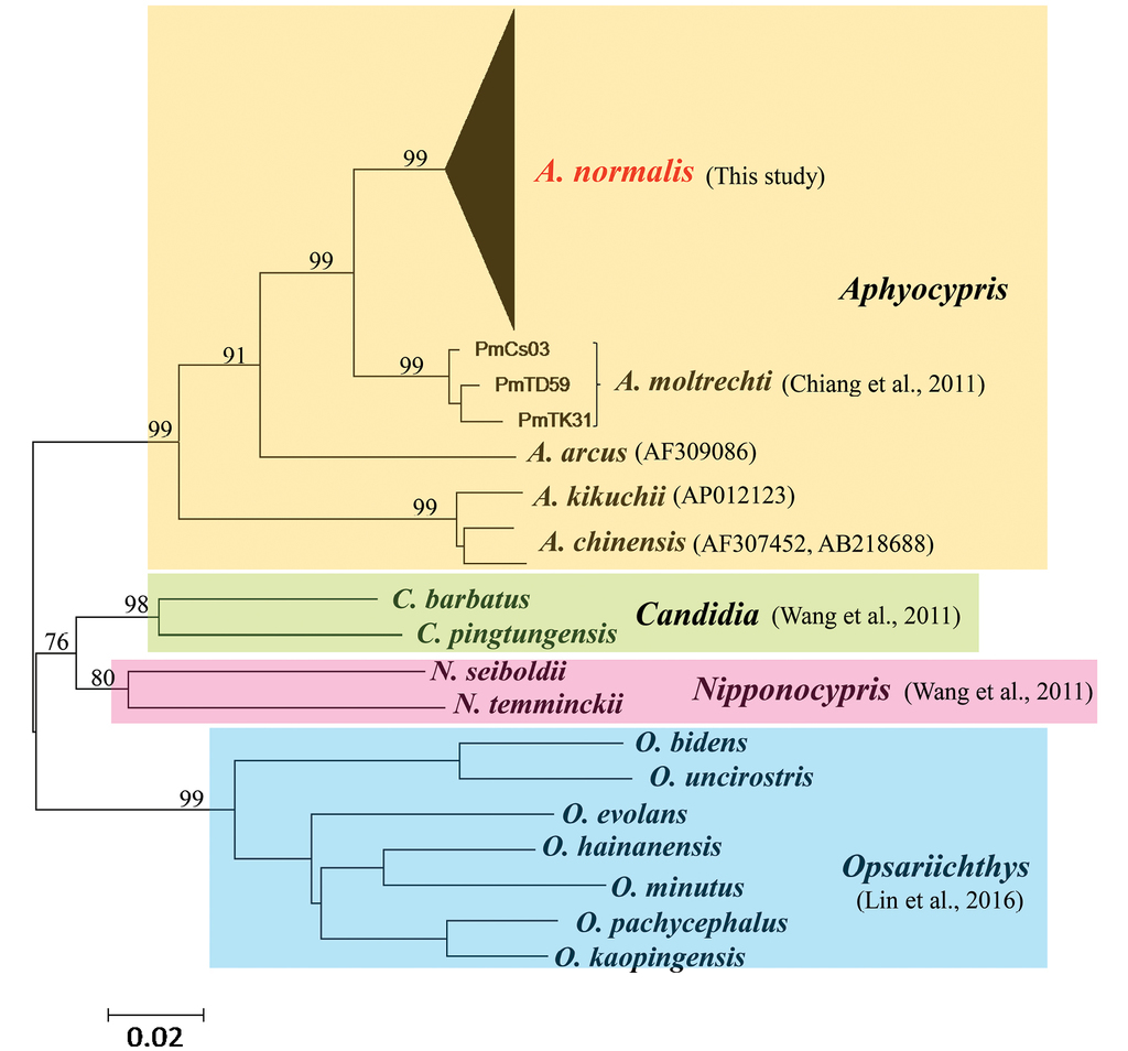 Population structure of Aphyocypris normalis: phylogeography