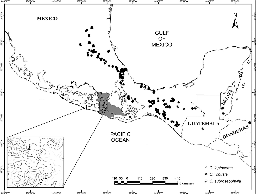 A Novelty In Ceratozamia Zamiaceae Cycadales From The Sierra Madre Del Sur Mexico Biogeographic And Morphological Patterns Dna Barcoding And Phenology